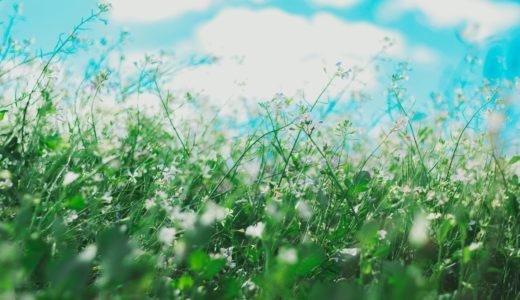伊勢丹の母の日 フラワー・ボタニカル『PACOS』のギフト