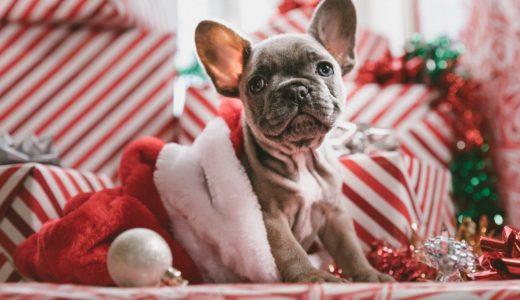 東急 愛犬が喜ぶペットのおせち、愛犬用 オードブルセット